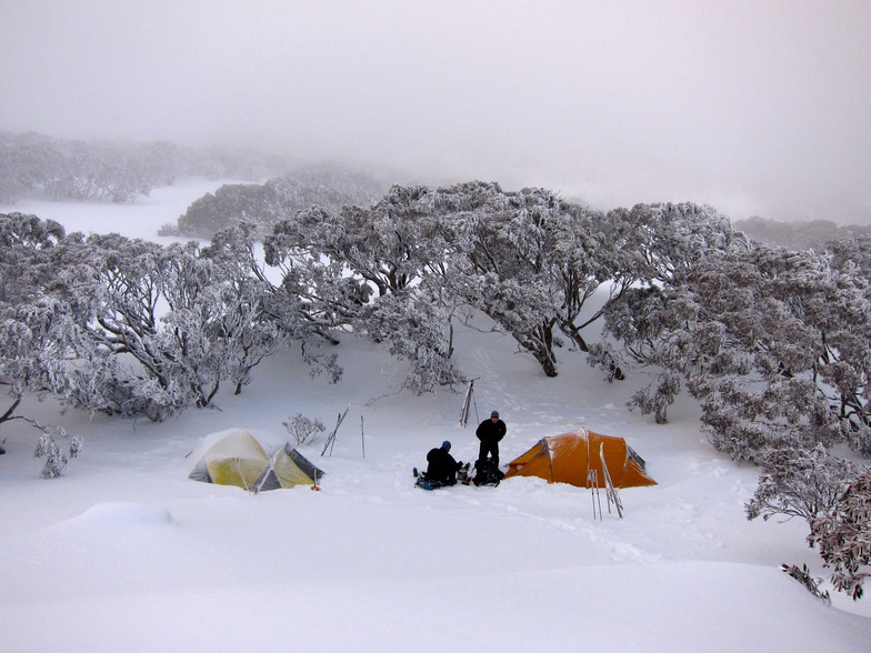Chilly morning near Bogong Creek, Thredbo, Australia