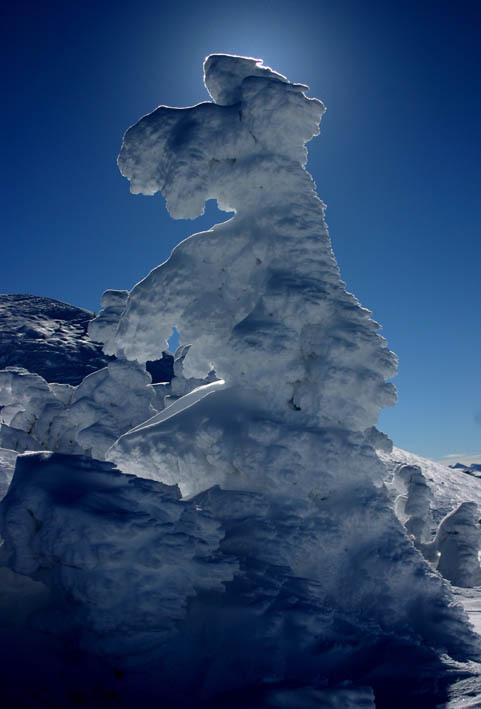 An interesting tree!, Mammoth Mountain