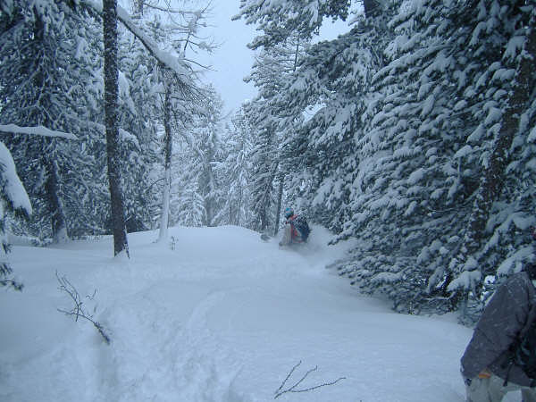 Powder in the trees, Champex-Lac