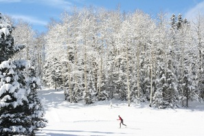 Enchanted Forest Cross Country Ski Area photo