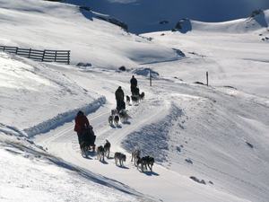 Dog Sled Tours SNow Farm photo