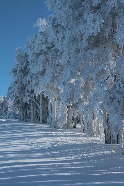 Lengas de nieve, Cerro Mirador