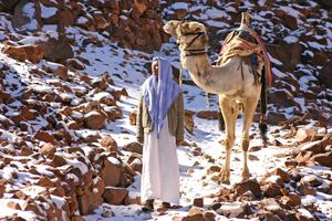 Snow Camels, Egypt, Jabal Katherina photo