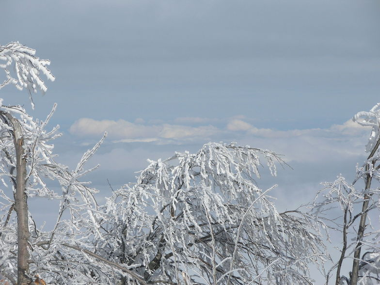 Snowy tree above the clouds, Kartepe