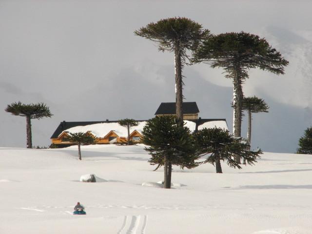 Nieves del Cerro y Araucarias, Caviahue