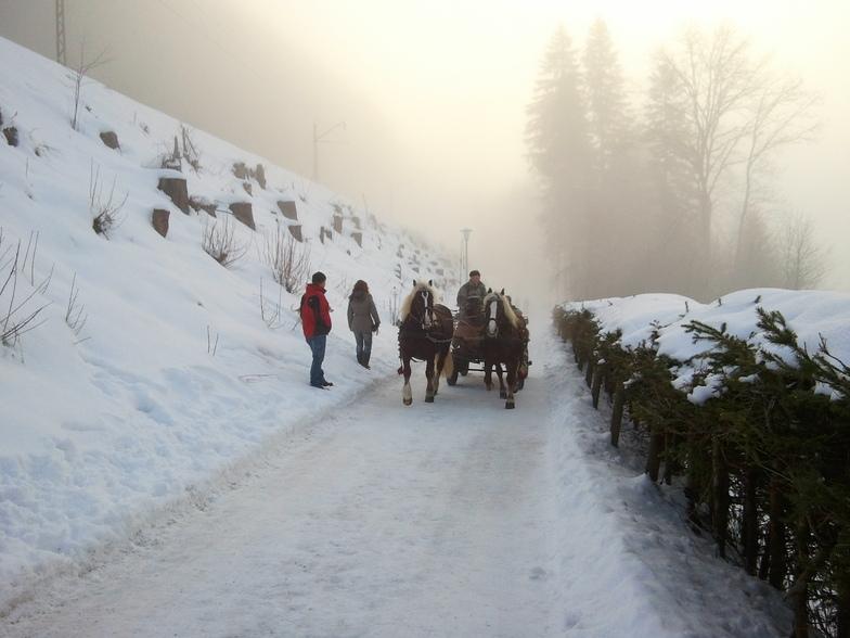 Cart with horses, Feldberg
