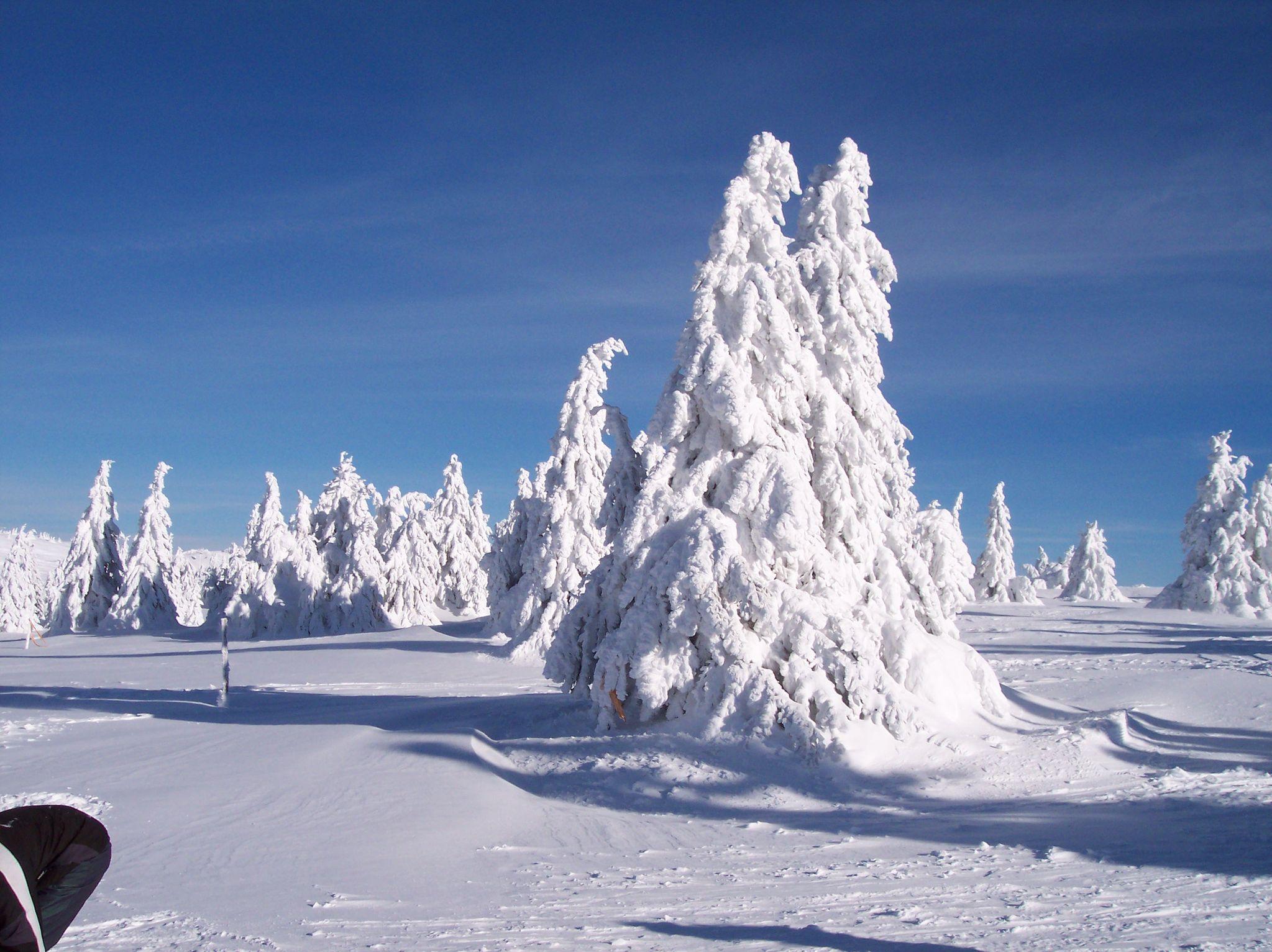 Fresh snowfall in Serbia, Kopaonik