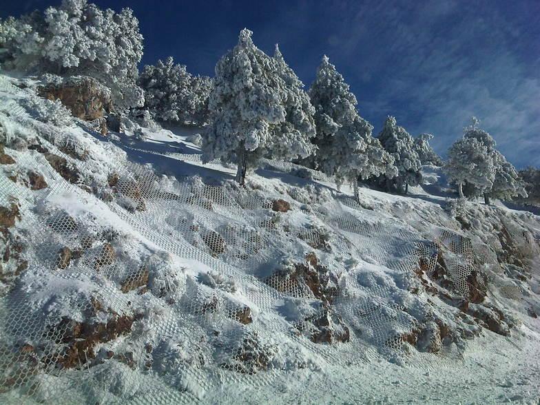 arboles, Sierra Nevada