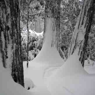 Lost in the Trees, Mount Buller