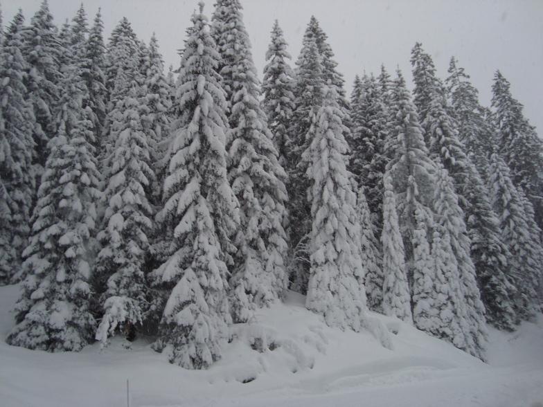 Snow in the Prattigauer Wald above Davos/Klosters