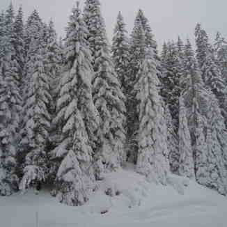Snow in the Prattigauer Wald above Davos/Klosters