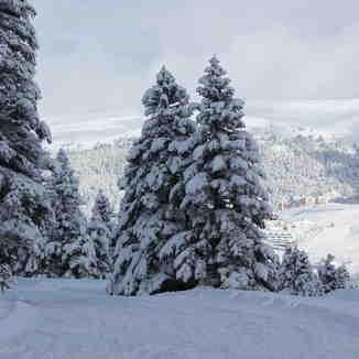 snow forest, Uludağ