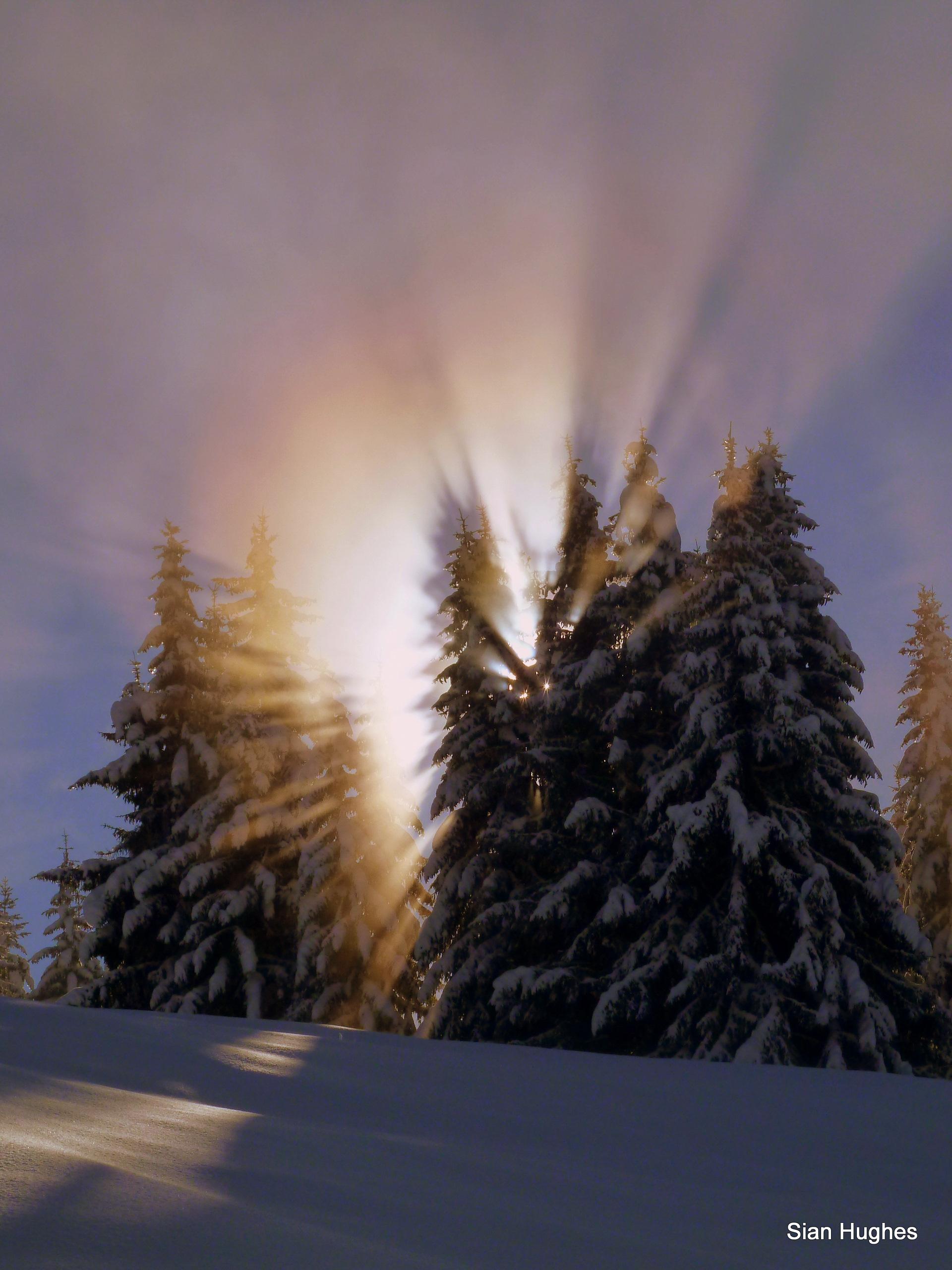 Spectrum through the trees, Les Gets