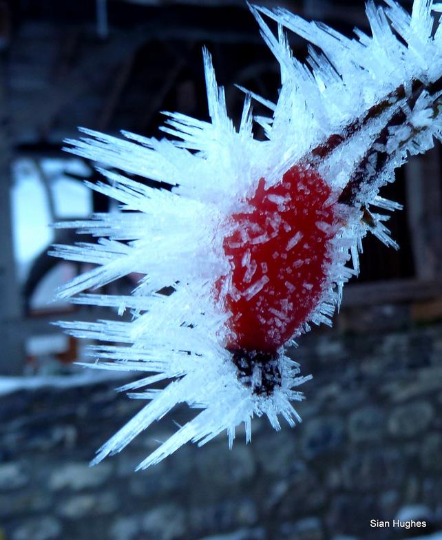 Haw Frost, Morzine