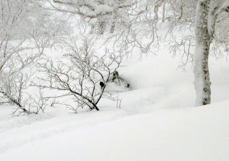 Asahidake trees