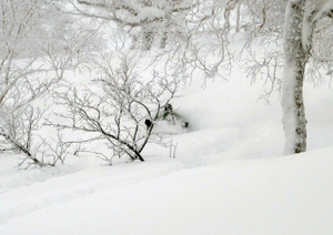 Asahidake trees photo