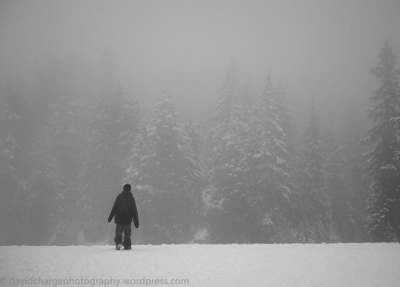 Cloud forest, Mt Seymour