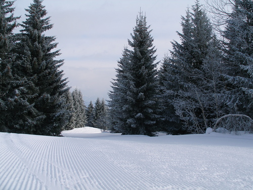 Obersaxen - Mundaun - Val Lumnezia Ski Resort by: Rolf Dittus