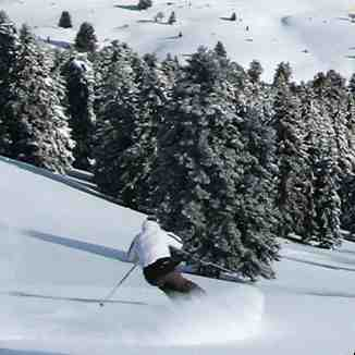 Tree powder skiing, Kalavryta Ski Resort