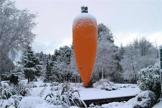 Ohakune's Carrot snowed in (Turoas base)
