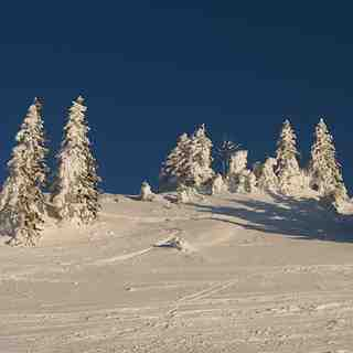 Trees plastered with snow, La Dôle