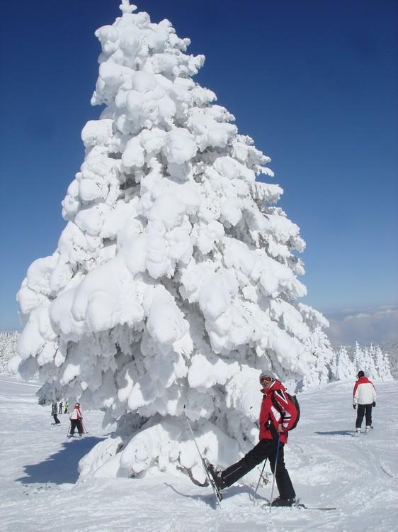 Snowy Tree :), Uludağ