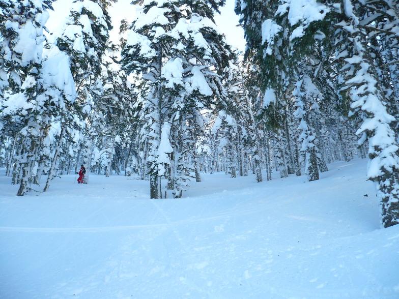 Tree skiing, Kalavryta Ski Resort