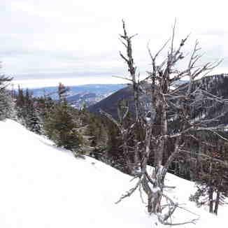 Skiing on the Wildside, Apex Resort