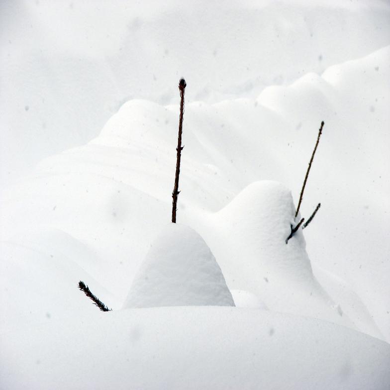 Over 200 cm. Of Snow, Mavrovo-Zare Lazarevski