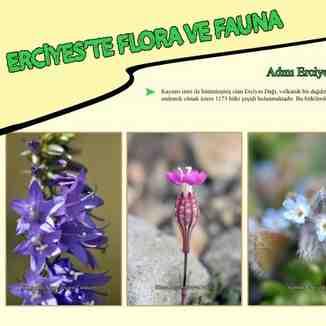 erciyes flora & fauna, Erciyes Ski Resort