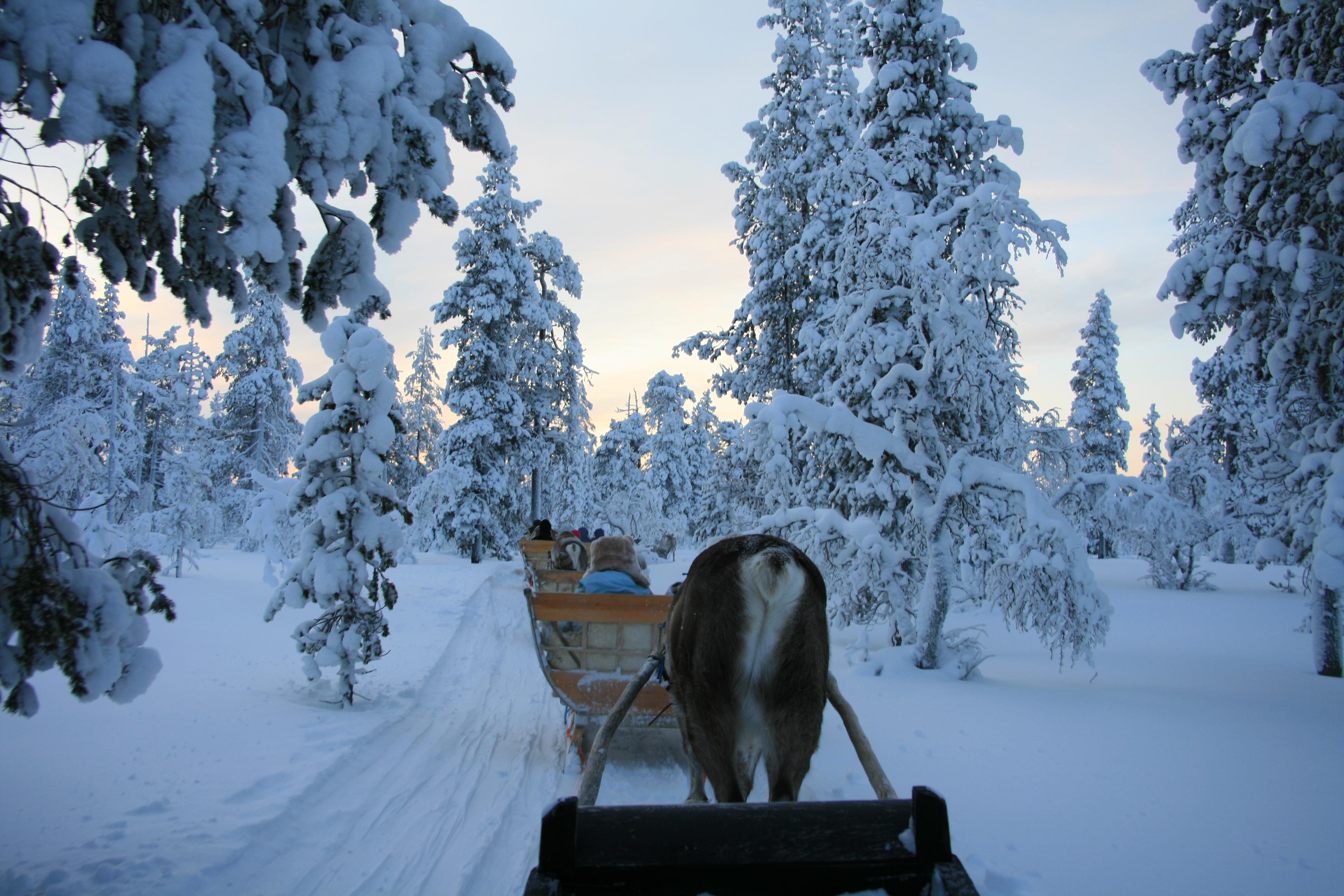 reindeer sliegh ride, Saariselka