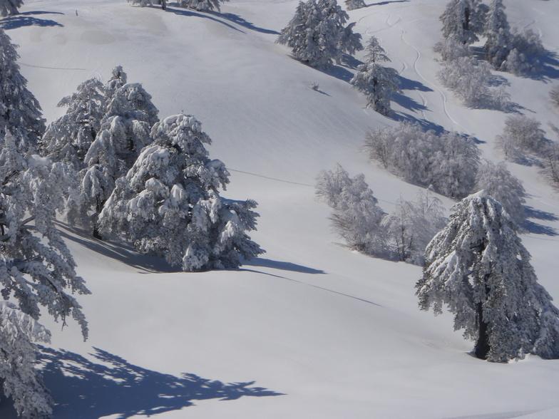 Vasilitsa 14 March 2012