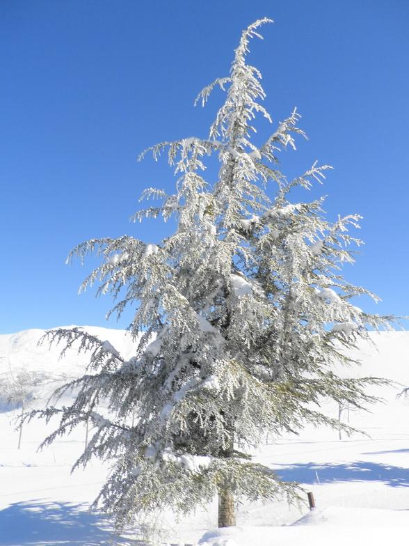 Zaarour Club snow