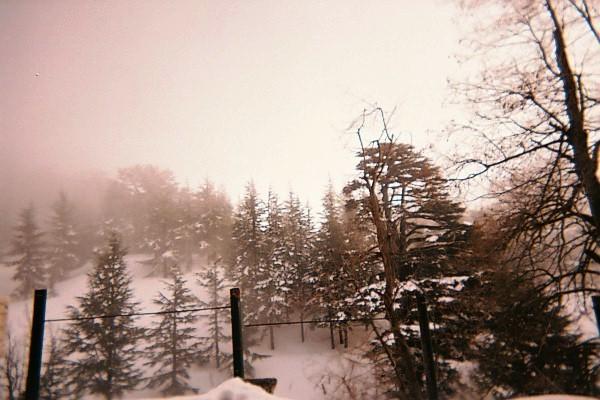 Cedars, Lebanon