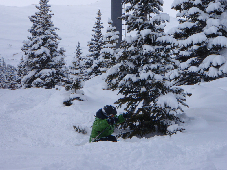 That tree again !, Breckenridge