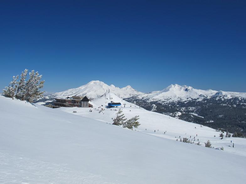 Pine Marten, Mt Bachelor