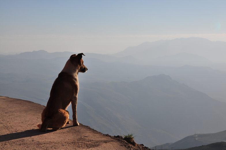 Thinking dog, Valle Nevado
