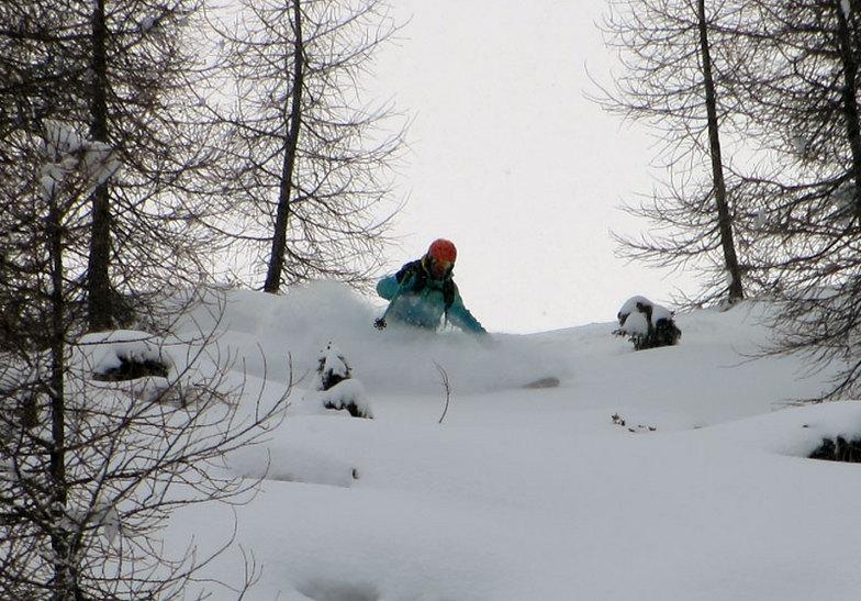 trees 5, Ski Area Alpe Lusia