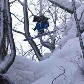 "Tree skiing in Podobovets, We call that place ""Magic Forest"":-)))"