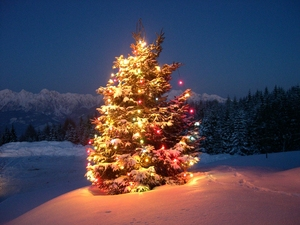 Christmas tree - Nevegal (Italy) photo