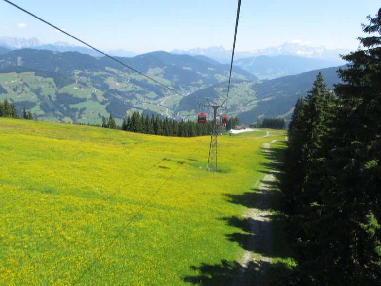 The Grafenberg In Its Summer Glory, Wagrain