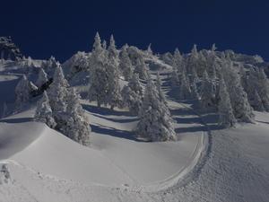 100% Austria, Ehrwalder Alm photo