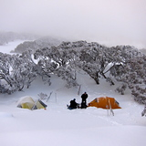 Chilly morning near Bogong Creek, Thredbo, Australia, Australia - New South Wales