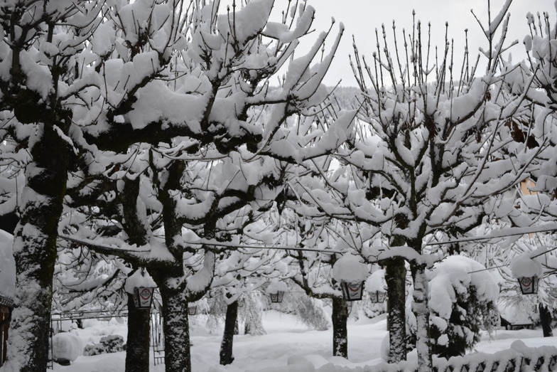 Black & White, Westendorf