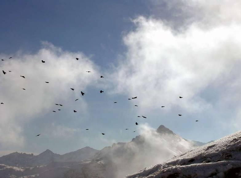 Mountain Crows top of Gamsleiten 2, Obertauern