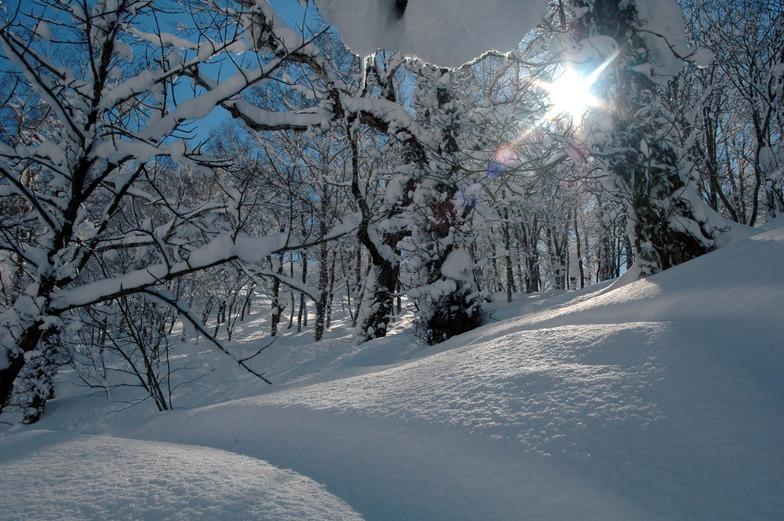 Powder in Rusutsu trees, Hokkaido, Japan, Rusutsu Resort