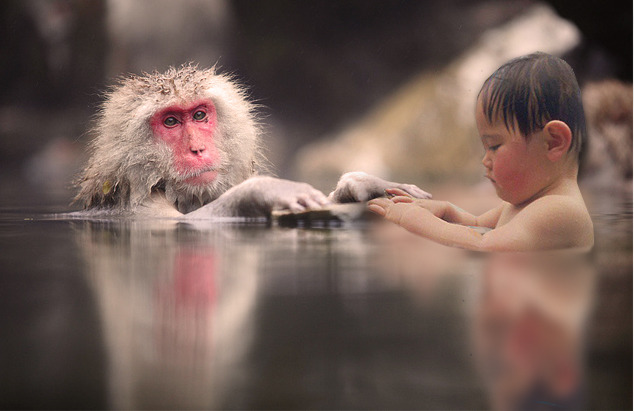 Happo Monkey Onsen, Happo One