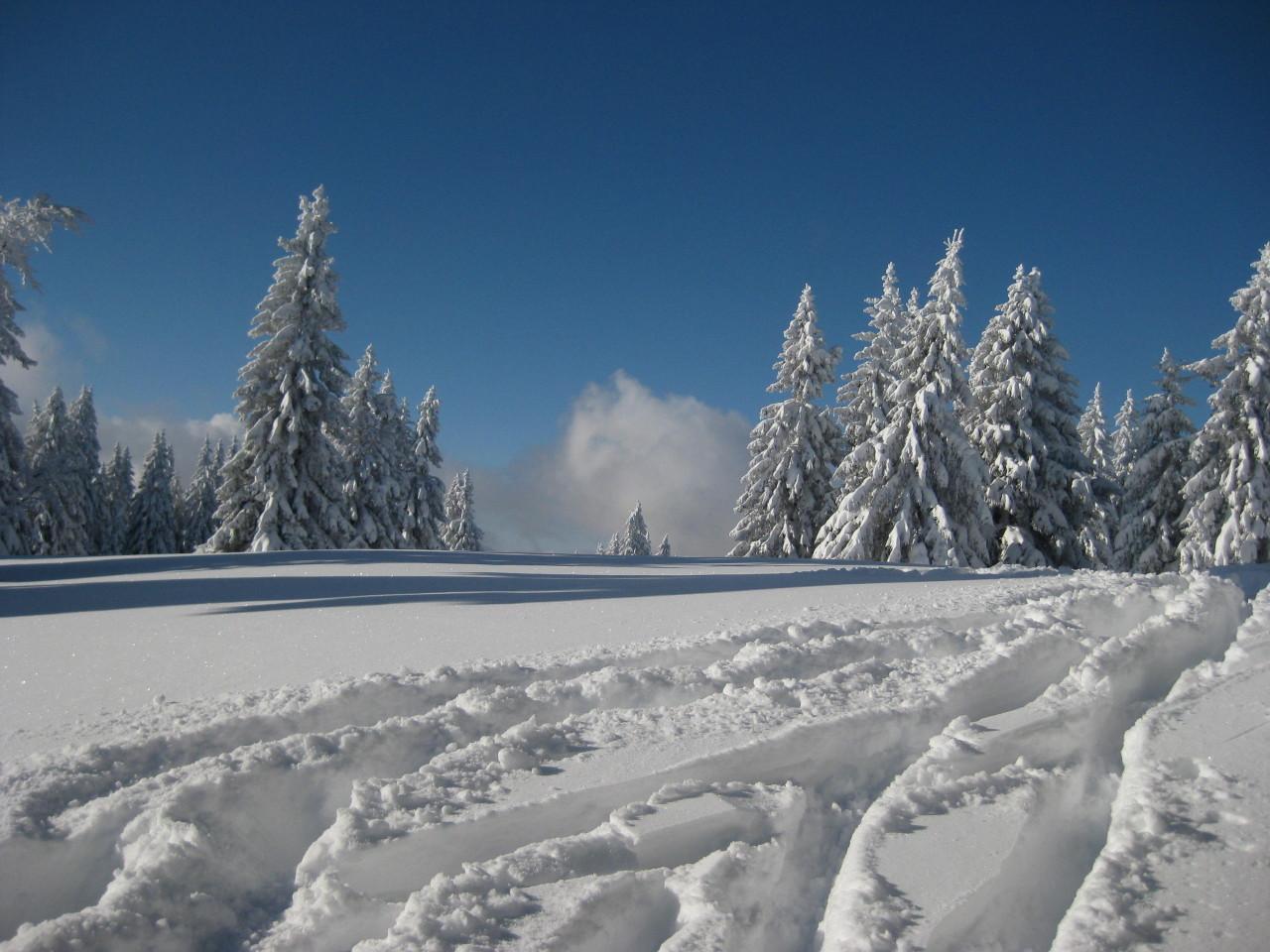 Sonne und Neuschnee, Feldberg