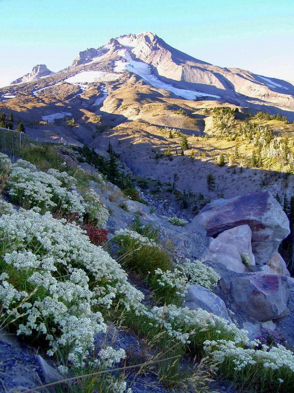 Mount Hood snow fields in September, Timberline