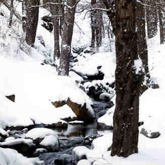 Stream, Mt Olympus